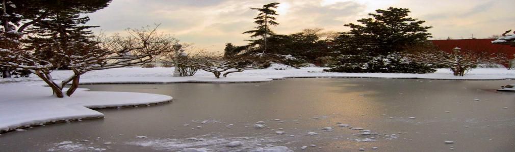 Frozen Pond Surrounded by Snow